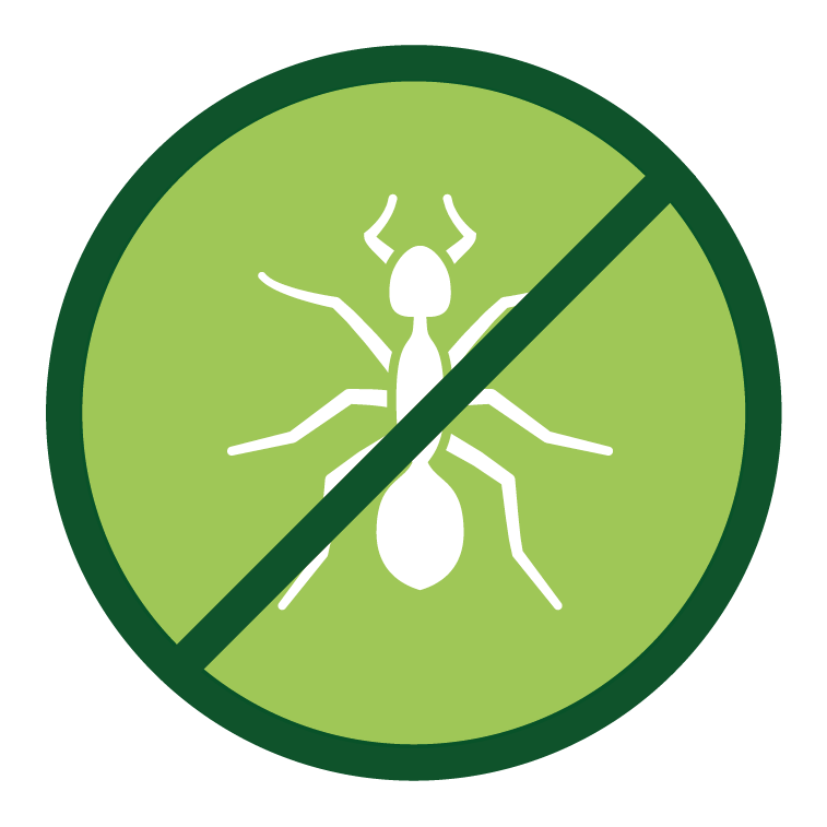 plaga de hormiga